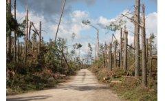 Przypominamy! Właściciele prywatnych lasów mogą starać się o zwrot kosztów za odnowienie powierzchni leśnej, zniszczonej w wyniku nawałnicy w sierpniu 2017 r.